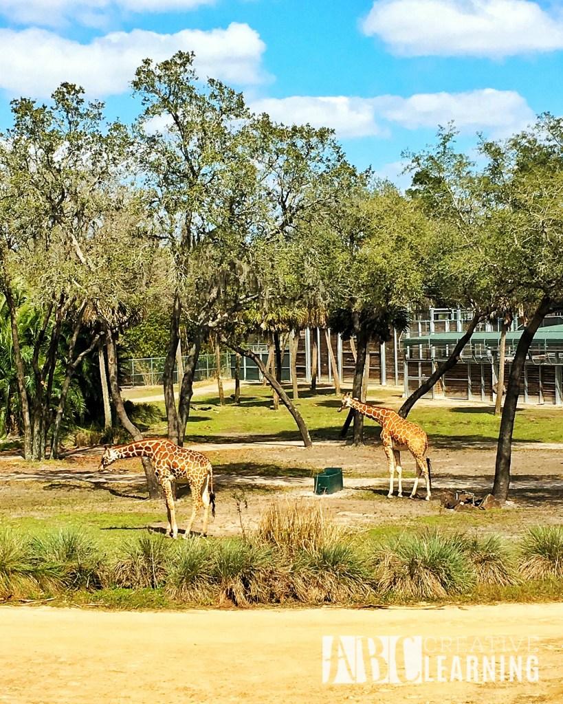 Reasons To Stay At Disney's Animal Kingdom Lodge #ZootopiaEvent Giraffes