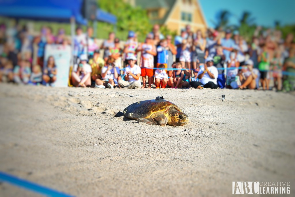 Teaching Our Youth To Take Care Of The Earth   Tour de Turtles at Disney's Vero Beach Resort - abccreativelearning.com