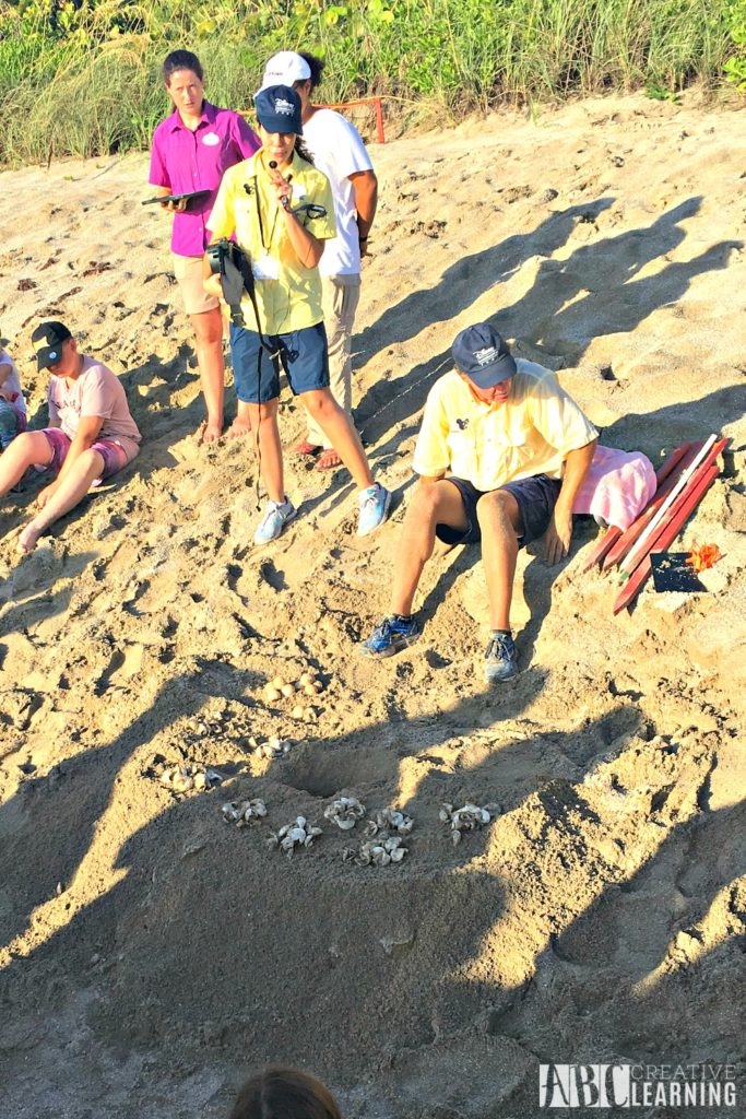 Teaching Our Youth To Take Care Of The Earth   Tour de Turtles at Disney's Vero Beach Resort - Turtle Eggs