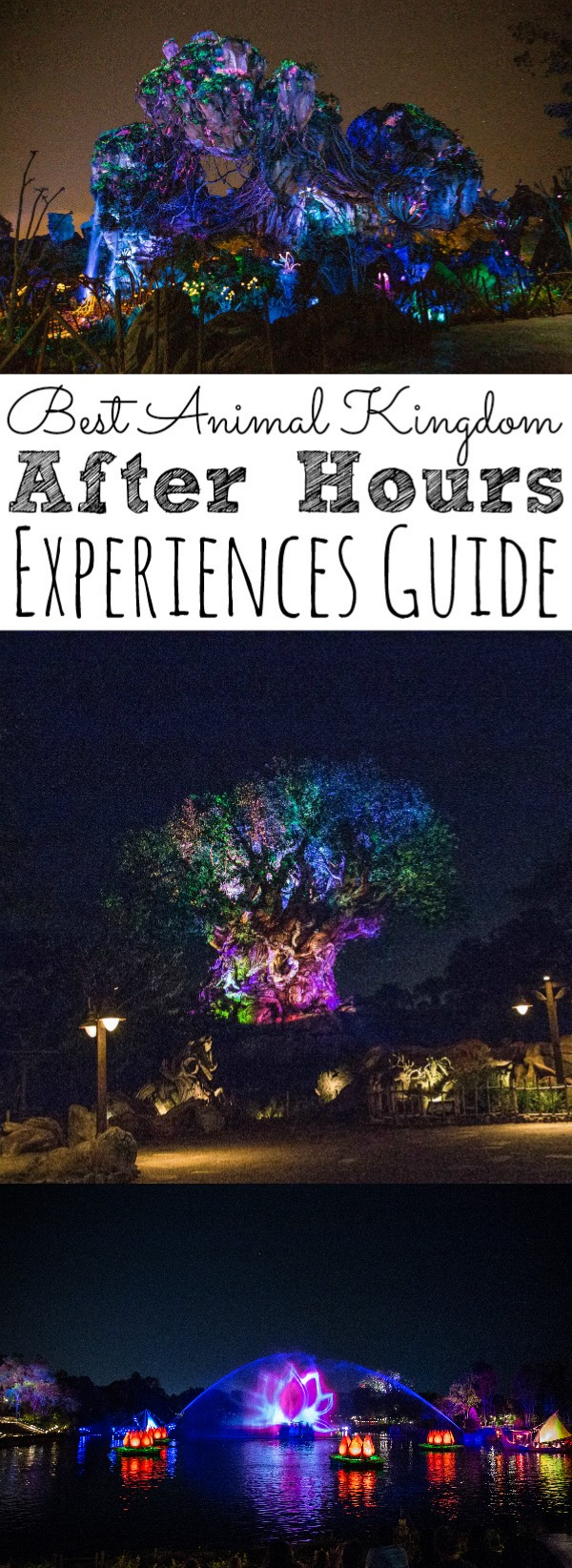 Best Animal Kingdom After Hours Experiences Guide