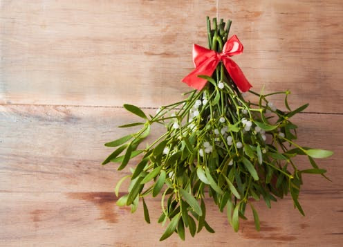 A bunch of mistletoe