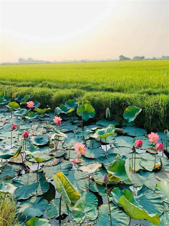 Hoi An countryside (6)