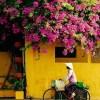 Da Nang and Hoi An Shore Excursion Private Tour (7)