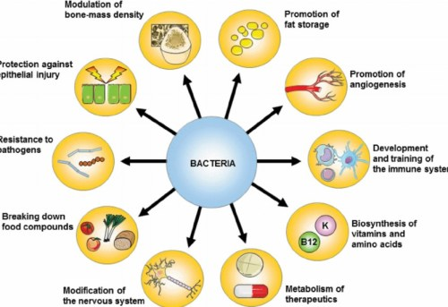 microbiome bacteria