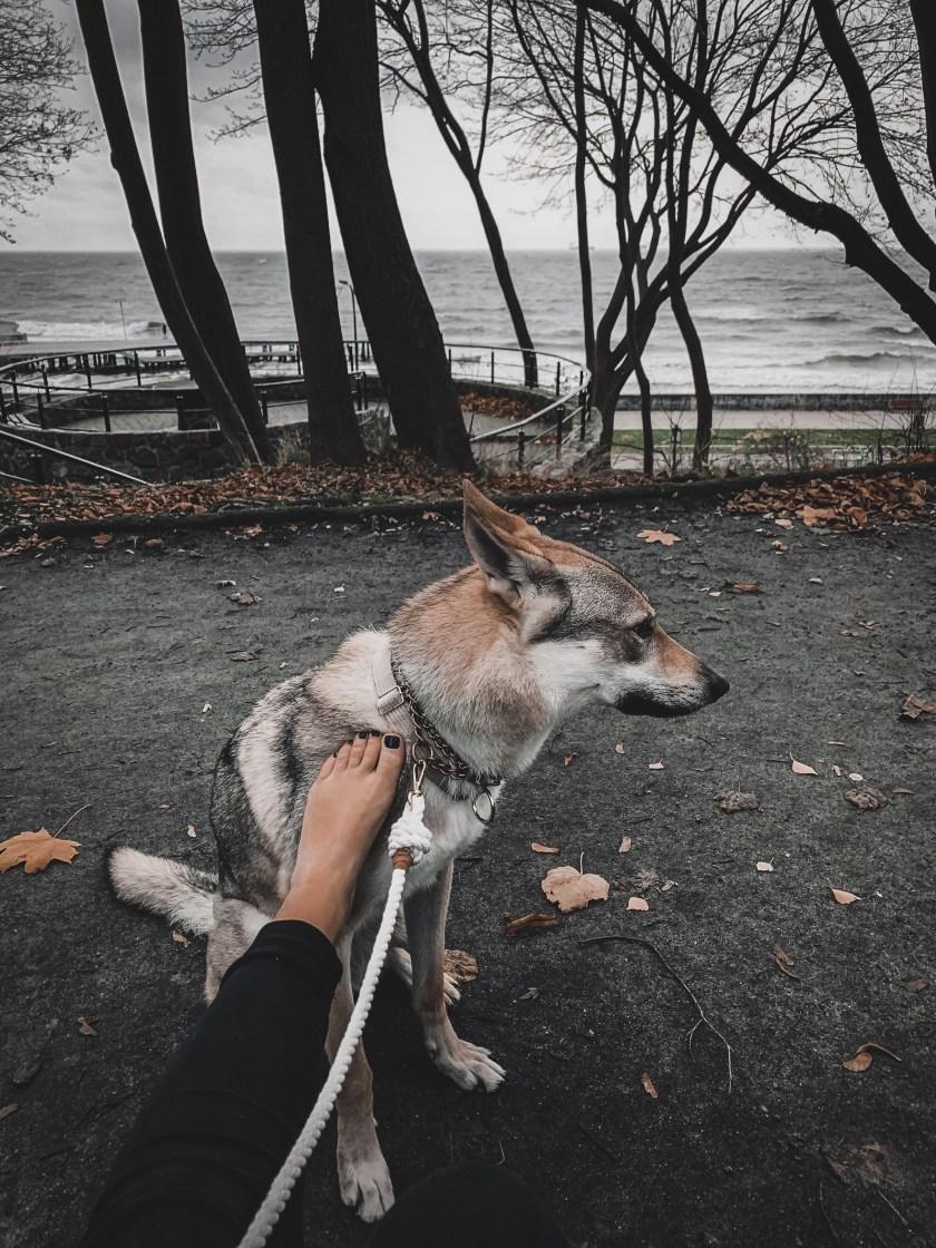 na spacerze z psem