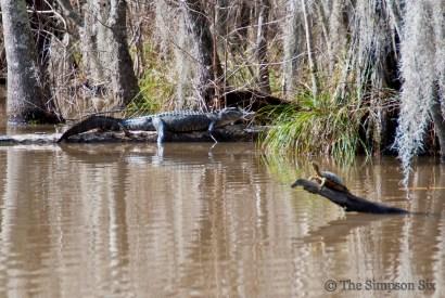 swamp tour 1