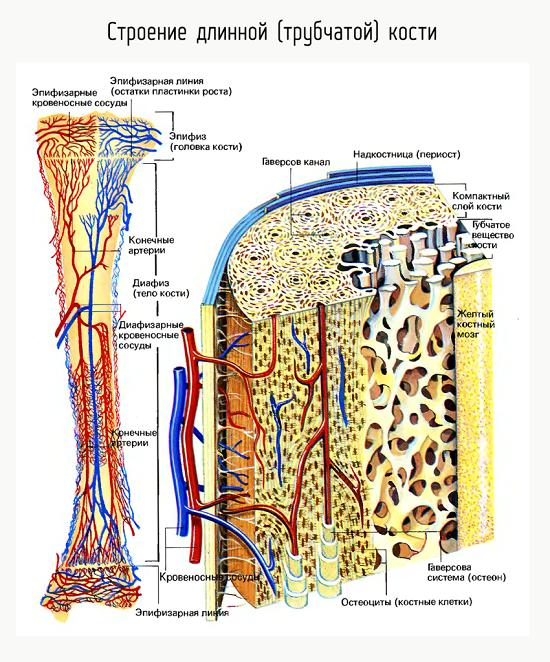 Рак подвздошной кости симптомы. Рак подвздошной кости: причины, стадии, диагностика и лечение