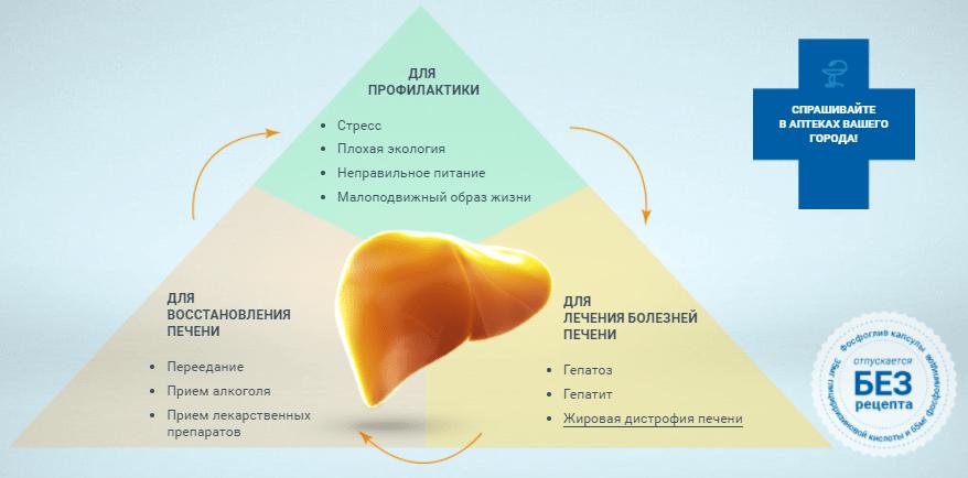 Điều trị và phục hồi phospheo gan