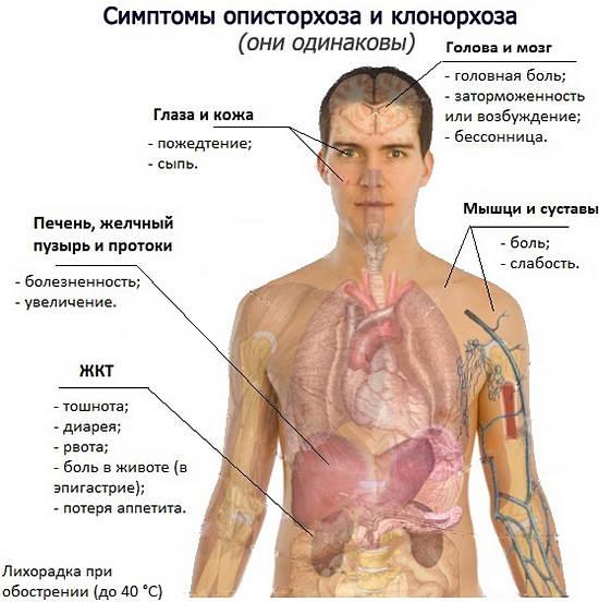 глисты у человека тошнота и