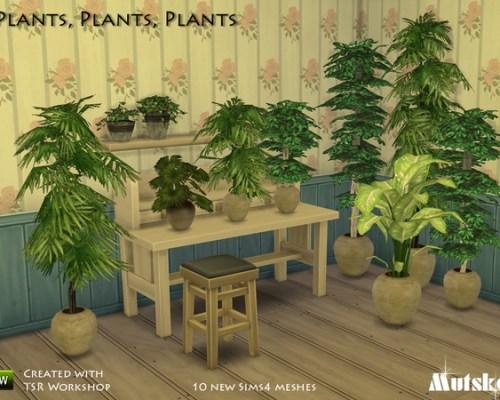 Plants by mutske