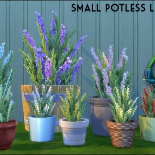Small potless lavender