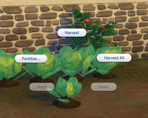 Harvestable Lettuce by plasticbox