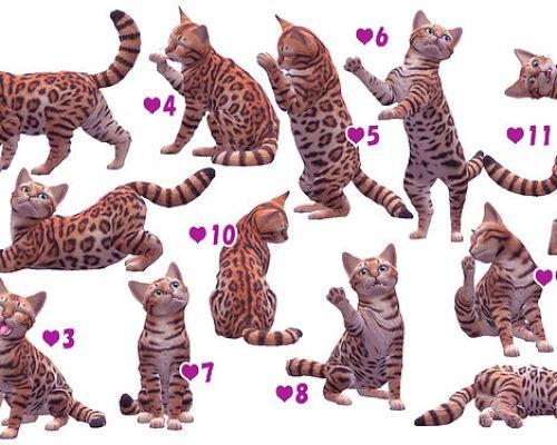 Cat & Kitten Pose