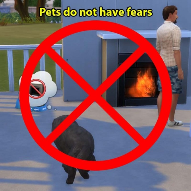 Pets Do Not Have Fears By Sasha973