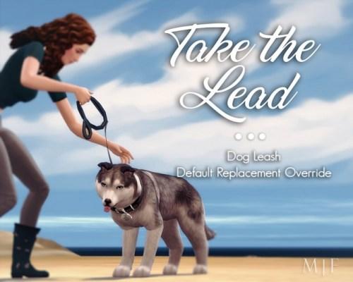 Take the Lead | Dog Leash Override