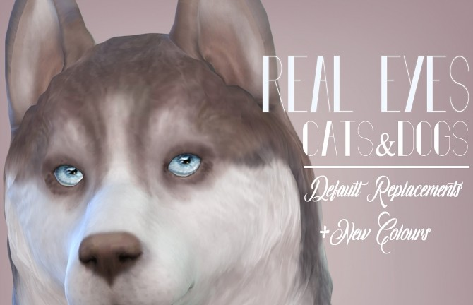 Real Eyes Cats & Dogs By Kellyhb5