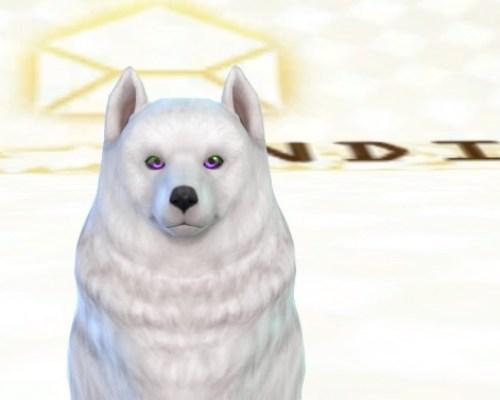 Shadow's Pet Eyes HALVES by ShadowEatsSkittlez