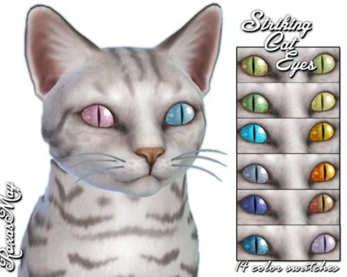 Striking Cat Eyes by roxasmay