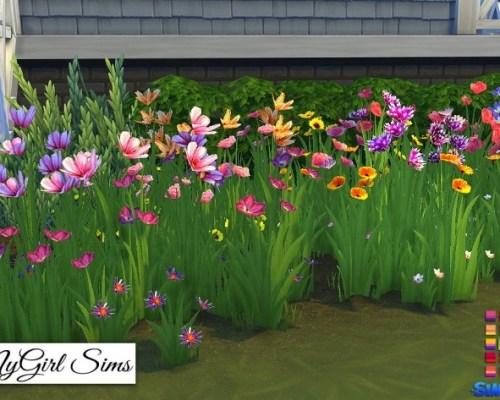 Wildflower Assortment