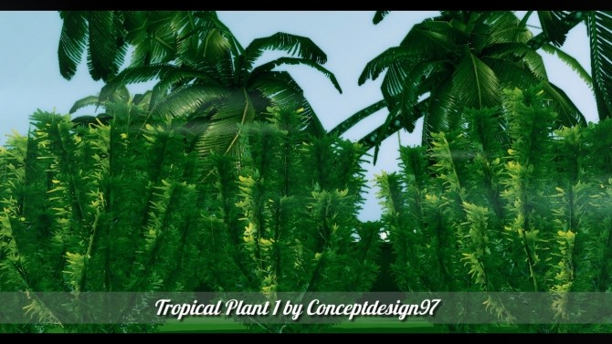Outdoor Pack 5  10 Tropical Plants  5 Palm Trees at