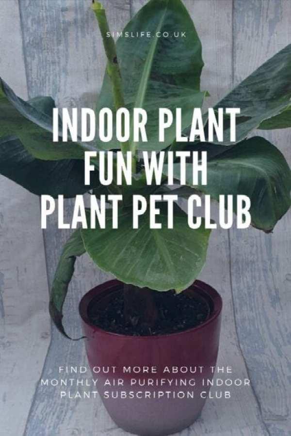 Plant Pet Club Pinterest