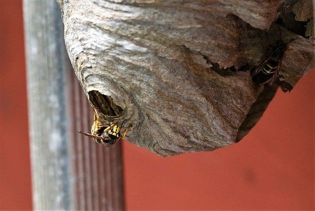 what does a wasp nest look like?