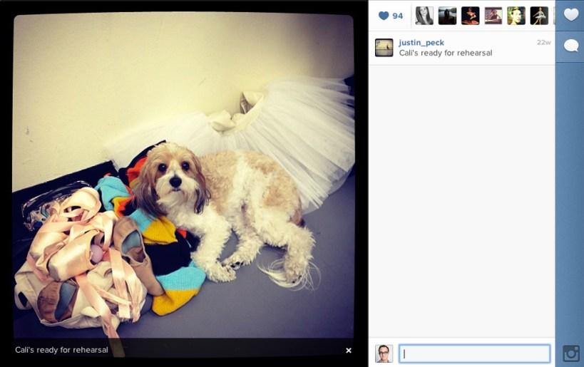instagram-Justin-Peck-dogs