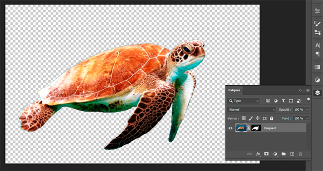 détourage tortue calque masque fusion