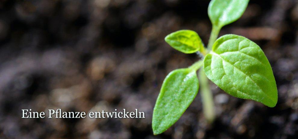 [Worldbuilding] Eine eigene Pflanze für deine Welt entwickeln