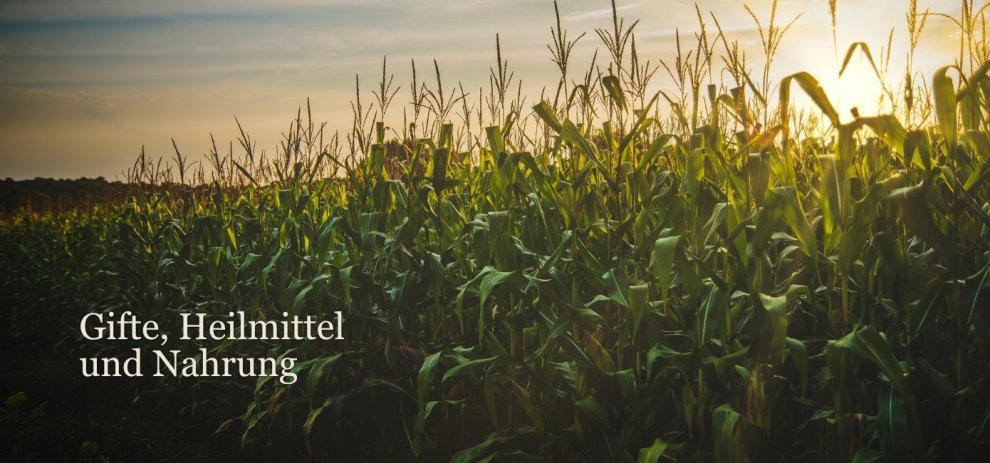 [Worldbuilding] Warum entstehen Heil-, Gift- und essbare Pflanzen?