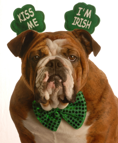 Saint Cute Puppy Hd Wallpaper St Paddy S Day Ireland Vs America Sincerely Annie