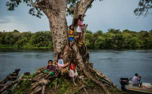 Munduruku children play in a tree across the river watching the arrival of the participants of the general meeting at Waro Apompu.