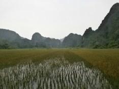 Ninh Binh - Arrozales
