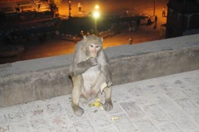 India Delhi Mercado de las especias Khari Baoli 02 - Los Mejores Lugares que ver en Nueva Delhi