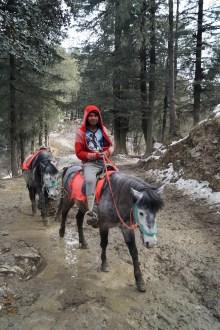 Shimla A caballo 02 - Shimla, lugares de interés: ciudad colonial al lado del Himalaya