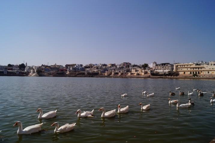India - Visiting Pushkar - Lago de Pushkar