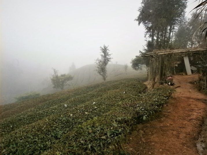 Viaje Yunnan Campos de té de Puer 1024x768 - Viaje a Yunnan: ¡12 días por China con todo incluido!