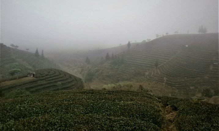 Viaje a Yunnan Puer Campos de Té - Trip to Yunnan: 12 days in China with all included!