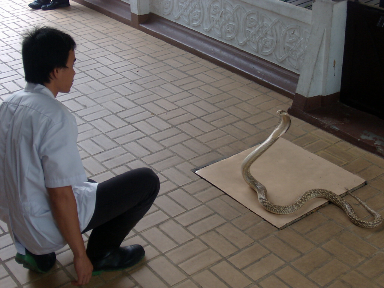 Bangkok Snake Farm - Visit to a snake farm in Bangkok