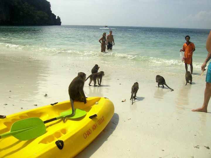 Tailandia 94 Kho Phi Phi - Koh Phi Phi, the most famous beach in the world
