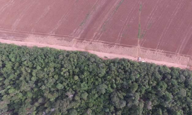 Dia Mundial do Meio Ambiente, uma data para se conscientizar, já que no Brasil não há muito o que comemorar.