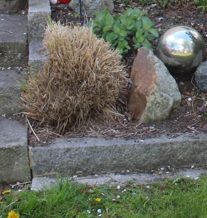 Gras am Eingang