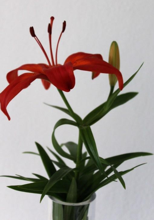 Orange Lilie in der Vase