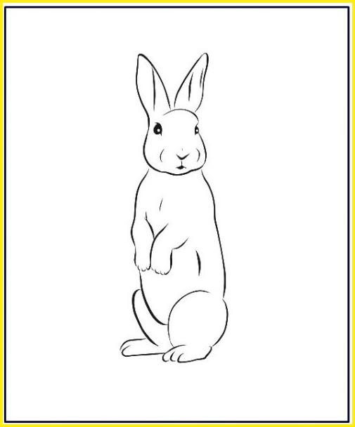 Contoh Gambar Kelinci : contoh, gambar, kelinci, Sketsa, Gambar, Kelinci, Mudah, Dibuat, (Lengkap)Kumpulan, (Lengkap), Sindunesia
