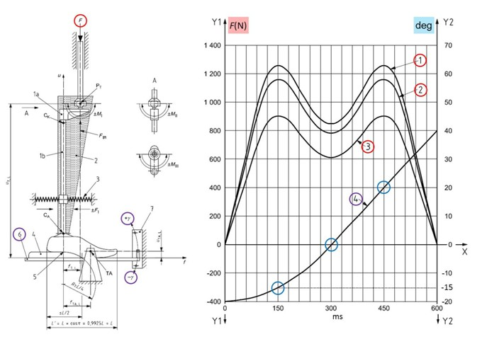 Performing Fatigue Destructive Testing on Ankle-Foot