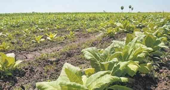 Los animales polinizadores son importantes para la producción de alimentos. Foto: Cuartoscuro