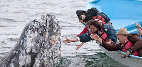 El político del PRD tiene ya su propio santuario de ballena gris, el cual ya quisiera cualquier multimillonario, incluso algún jeque árabe. Foto: Zeta especial para SinEmbargo.
