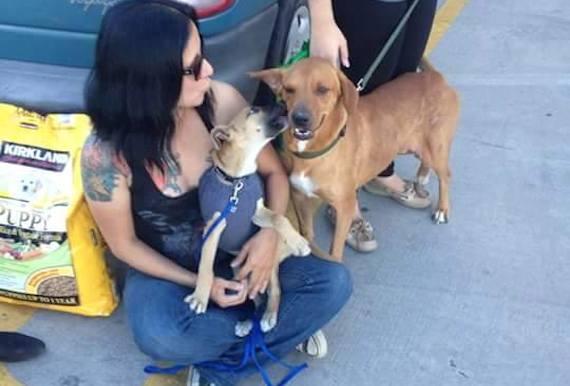 Dalia con Boby y Caty durante el encuentro con más personas el día del Super Bowl. Caty también es una perra rescatada que era violada por un indigente en la calle. Foto: Cortesía- Dalia Gámez.