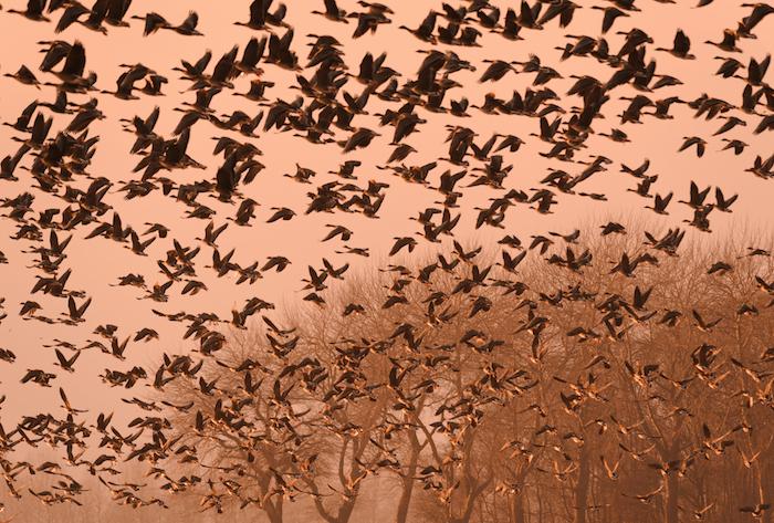 El argumento de los partidos que impulsaron la prohibición de la caza deportiva fue que la población de la especie se regularía sola, pero no fue así. Foto: Shutterstock