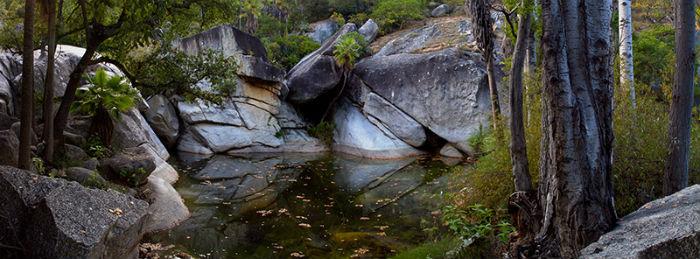 Considerada una de las regiones más biodiversas de la península de Baja California, en la Sierra de la Laguna de la Biosfera se encuentran principalmente bosques de pino y encino alternando con otras poblaciones vegetales, entre las que se incluyen zonas semidesérticas y áreas menores con selvas bajas. Foto: Tomada de Internet